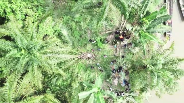 Environmentalists and conservation officials cut down illegally planted oil palm trees at Gunung Leuser National Park in Indonesia's Aceh province