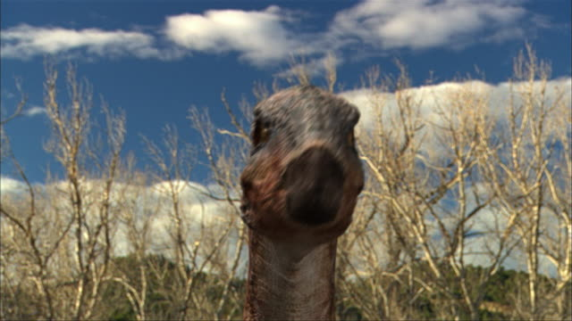 cgi, cu, eoraptor looking around in field, headshot - eoraptor stock videos and b-roll footage