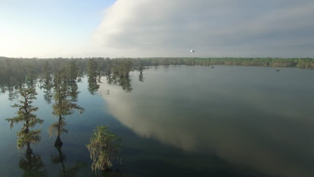 Epic beautiful flight with bird close - Drone Aerial 4K Everglades, Swamp bayou with wildlife alligator nesting Ibis, Anhinga, Cormorant, Snowy Egret, Spoonbill, Blue Heron, eagle, hawk, cypress tree 4K Nature/Wildlife/Weather