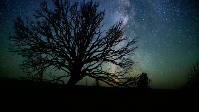 Epic milky way in desert behind dead western juniper tree and UFO red orb lights 90 degree turns and join together South Steens Mountain near Malheur National Wildlife Refuge