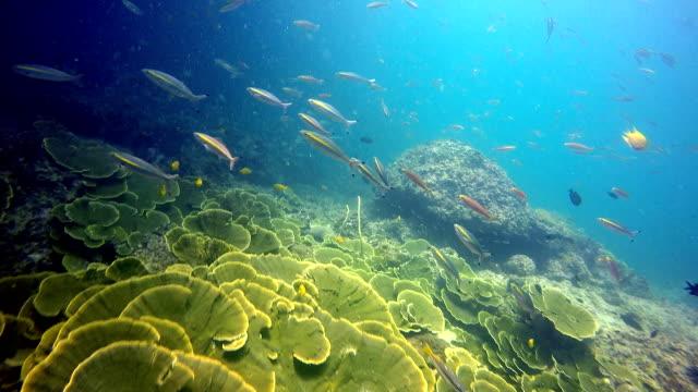 episka slag under vattnet: labyrint korall (montipora). - dykarperspektiv bildbanksvideor och videomaterial från bakom kulisserna