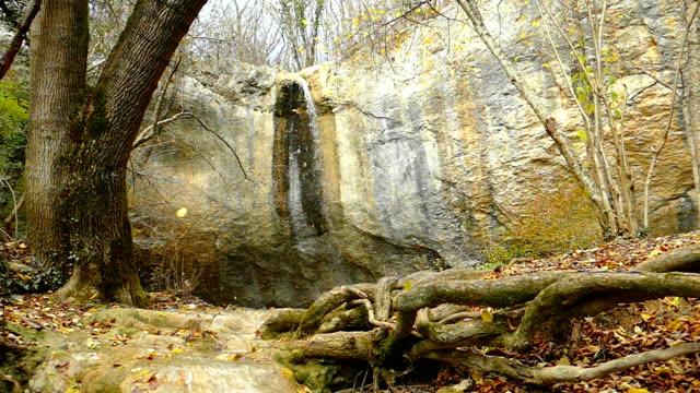 epischer wasserfall in einem bergwald (langsame bewegung) - baumgruppe stock-videos und b-roll-filmmaterial
