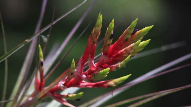 epiphyte in the everglades