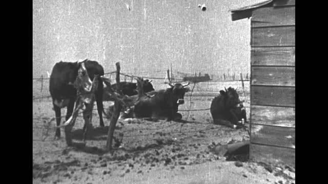 "episode g-08] greatest headlines of the century title sequence / title card: ""dust bowl victims"" / [june 1934, south dakota] vs wind blows, dust... - 1930 1939 stock-videos und b-roll-filmmaterial"