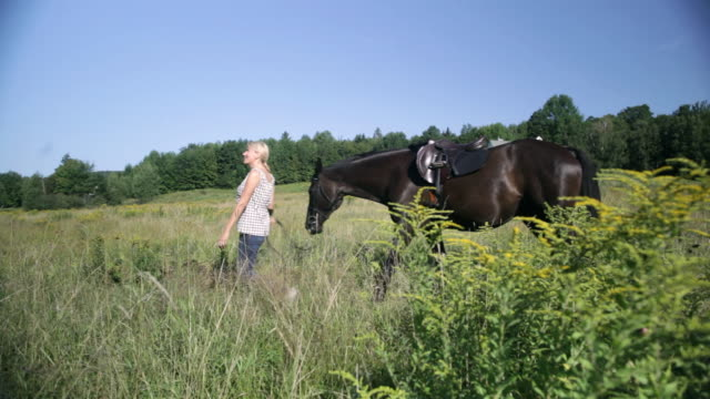 ds equestrian leading a horse through a grassy field, past a farmhouse in the distance / stowe, vermont, united states - arbetsdjur bildbanksvideor och videomaterial från bakom kulisserna