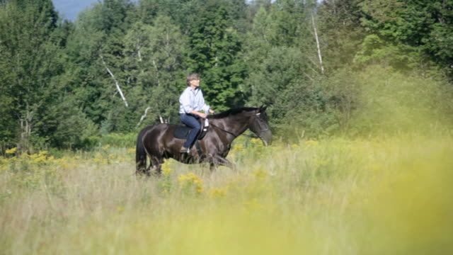 ts equestrian riding horse across a grassy field / stowe, vermont, united states - recreational horseback riding stock videos & royalty-free footage