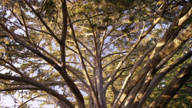 esalen tree with mandala (tilt down) - mandala stock videos & royalty-free footage