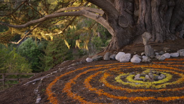 Esalen Tree with Mandala