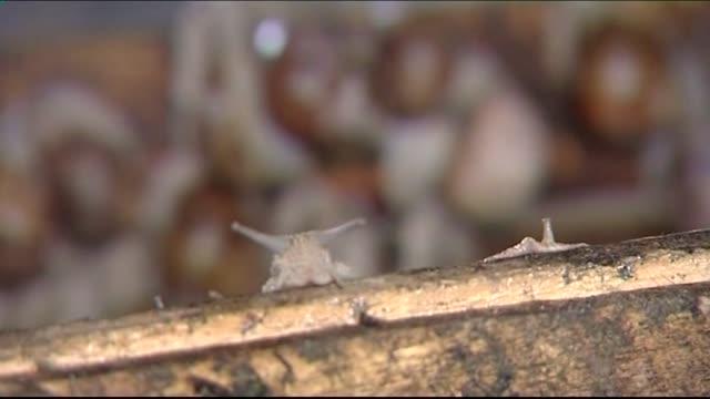 stockvideo's en b-roll-footage met escargot - voelspriet