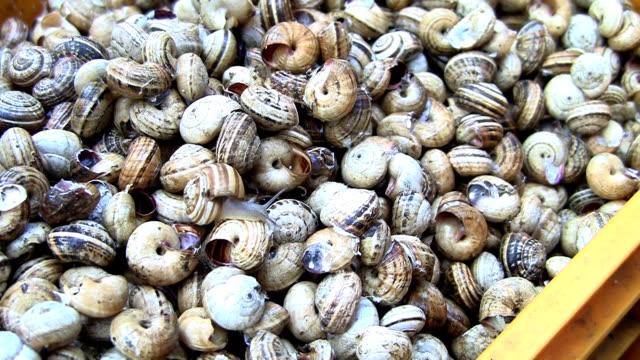 escargots, raw food in palermo, italy. - mollusk stock videos & royalty-free footage