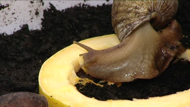 escargots - invertebrate stock videos & royalty-free footage