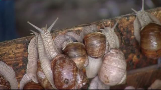 escargots - animal antenna stock videos & royalty-free footage