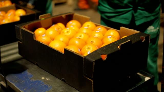 escolhendo frutas em インダストリア デ laranja - オレンジ果樹園点の映像素材/bロール