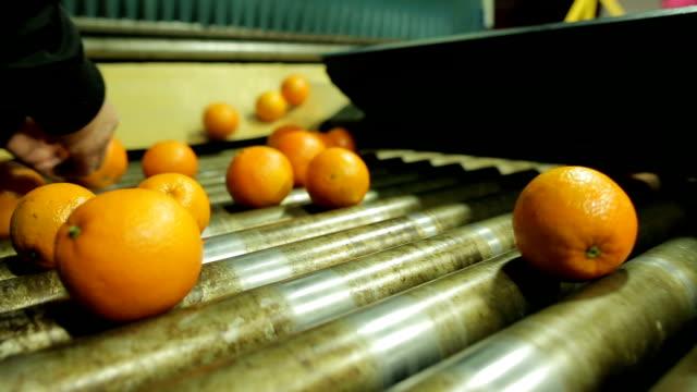 stockvideo's en b-roll-footage met escolhendo frutas em indústria de laranja - oranje