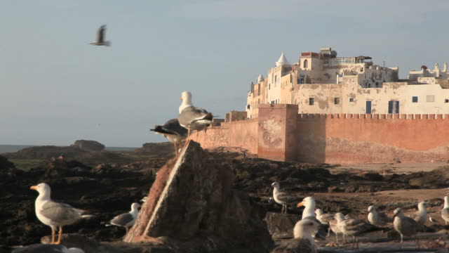 Essaouira Morocco HD video