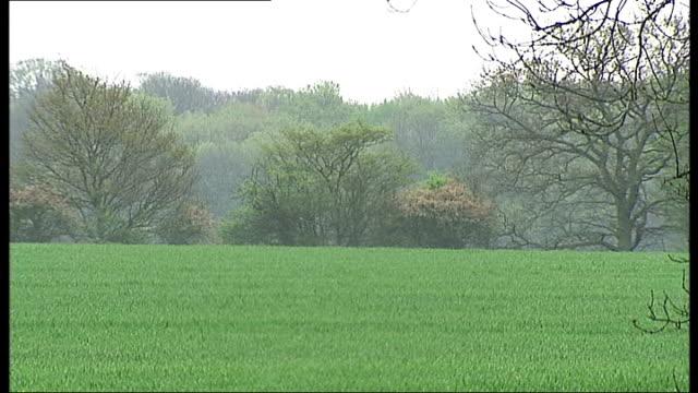essex village scenes; england: essex: brentwood: blackmore: ext duck pond on village green/ 'ducks crossing' sign/ houses overlooking village pond/... - エセックス州点の映像素材/bロール