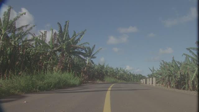 vidéos et rushes de est. banana plantation, hawaii - angle de prise de vue