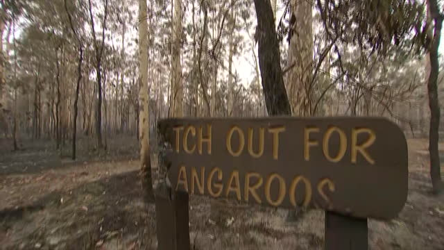 establishing camera pan of the charred landscape outside a kangaroo wildlife refuge in australia. - environment or natural disaster or climate change or earthquake or hurricane or extreme weather or oil spill or volcano or tornado or flooding stock videos & royalty-free footage