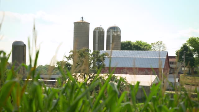 establishing shot of a corn field at a farm in wisconsin. - business or economy or employment and labor or financial market or finance or agriculture stock videos & royalty-free footage