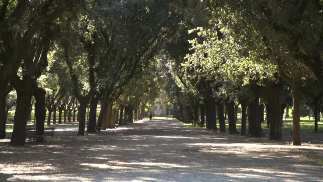 establishing shot of a person walking in a reopened park in rome italy during the coronavirus pandemic - healthcare and medicine or illness or food and drink or fitness or exercise or wellbeing video stock e b–roll