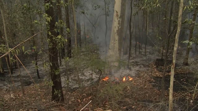 establishing shot of a small bushfire burning in australia. - environment or natural disaster or climate change or earthquake or hurricane or extreme weather or oil spill or volcano or tornado or flooding stock videos & royalty-free footage