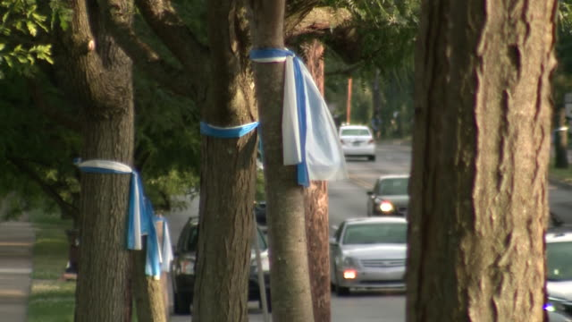 establishing shot of blue and white awareness ribbons for otto warmbier tied around trees in wyoming ohio on june 13 2017 - societal symbol stock videos & royalty-free footage
