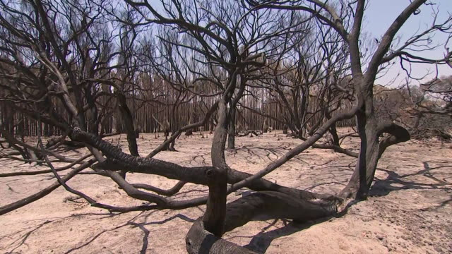 establishing shot of charred trees and landscape in australia following massive wildfires in the country. - environment or natural disaster or climate change or earthquake or hurricane or extreme weather or oil spill or volcano or tornado or flooding stock videos & royalty-free footage