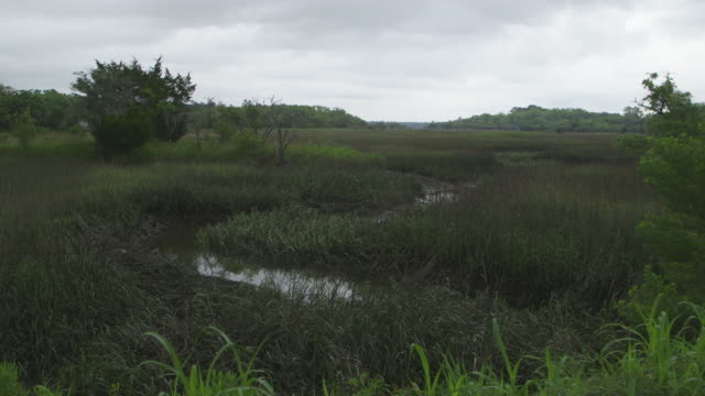 establishing shot of hilton head swamp river - swamp stock videos & royalty-free footage