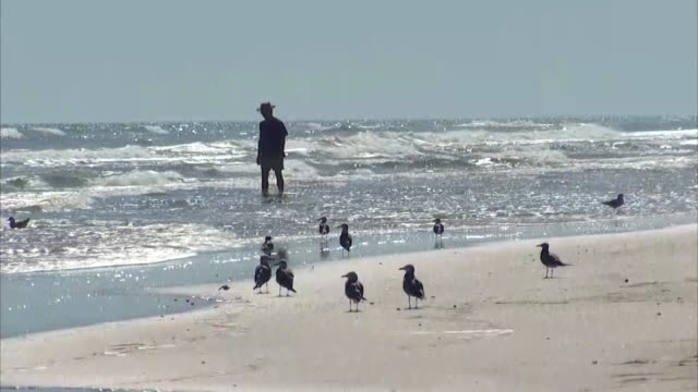 establishing shot of seagulls and the silhouette of a man on the beach at padre balli park in corpus christi, texas. - gulf of mexico stock videos & royalty-free footage