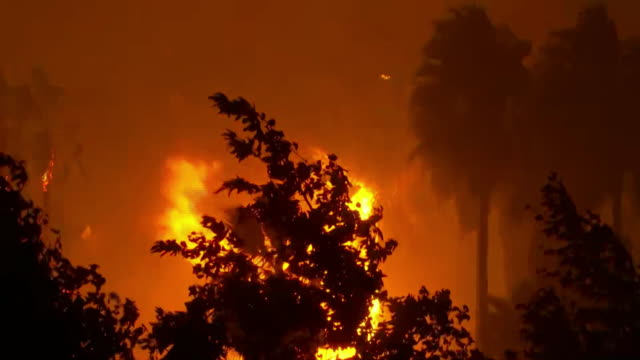 establishing shot of trees engulfed in flames during the ranch wildfire in azusa, california. - environment or natural disaster or climate change or earthquake or hurricane or extreme weather or oil spill or volcano or tornado or flooding stock videos & royalty-free footage