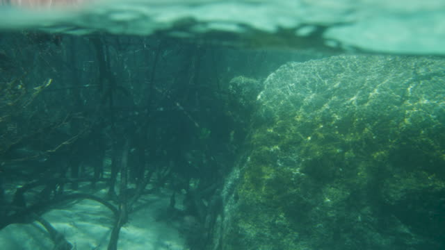 establishing the rocks and magroves underwater - mangrove forest stock videos & royalty-free footage