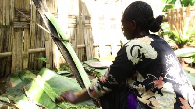 ethiopia- dorze using false banana - エチオピア点の映像素材/bロール