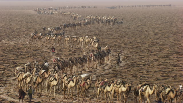 ethiopia : men and camels walking in the salt mines of the assal lake - ethiopia stock videos and b-roll footage