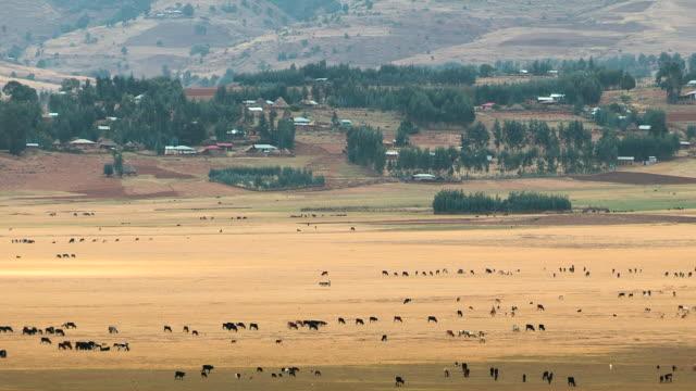 ethiopia - アジスアベバ点の映像素材/bロール