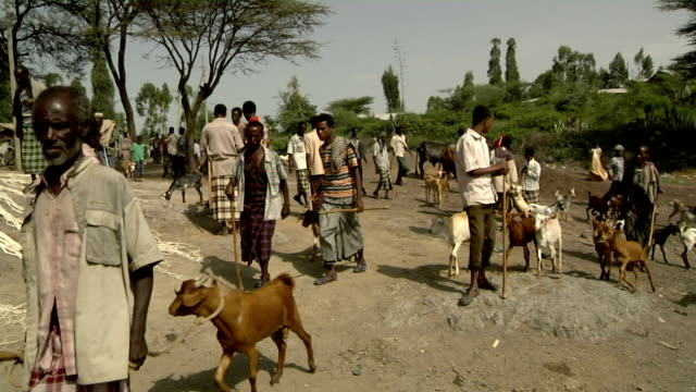 ethiopian camel market general view on august 06 2011 in bati ethiopia - general view stock videos and b-roll footage