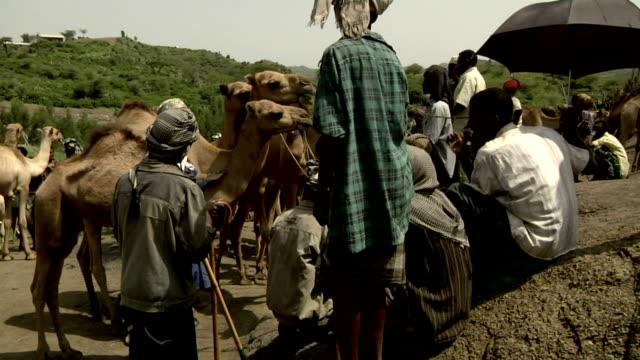 ethiopian camel market on august 05, 2011 in bati, ethiopia - アフリカの角点の映像素材/bロール