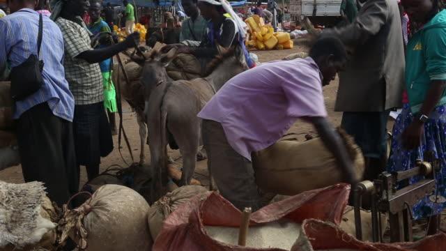 ethiopian market - medium group of animals stock videos & royalty-free footage