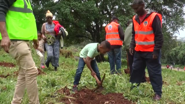ethiopians from all walks of life took to open spaces nationwide on monday to take part in a massive campaign that set out to plant 200 million... - äthiopien stock-videos und b-roll-filmmaterial