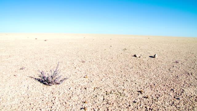 ws ds エトーシャパン - 乾燥気候点の映像素材/bロール