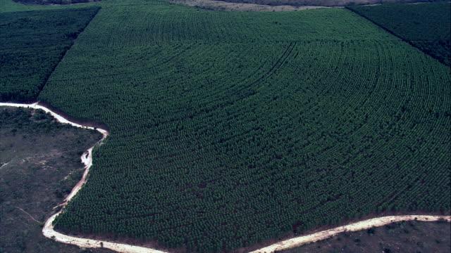 eukalyptus plantage, bundesstaat minas gerais-luftaufnahme-minas gerais, três marias, brasilien - tropischer baum stock-videos und b-roll-filmmaterial