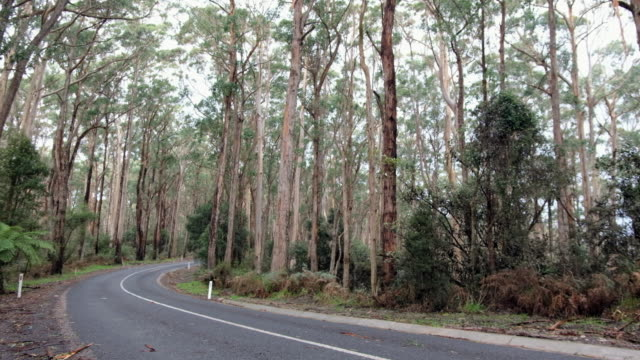 eucalyptus tree in australia. - branch stock videos & royalty-free footage