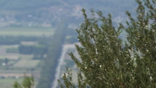 eucalyptus tree w pan of akaya - mediterranean - wiese stock videos & royalty-free footage
