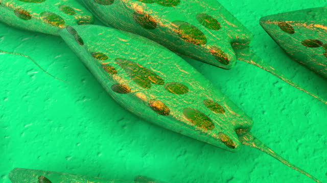 euglena - genetic research stock videos & royalty-free footage