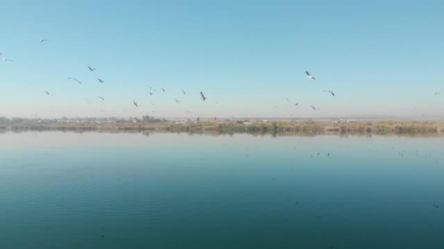 euphrates river, birecik, sanliurfa, turkey - mesopotamia stock videos and b-roll footage