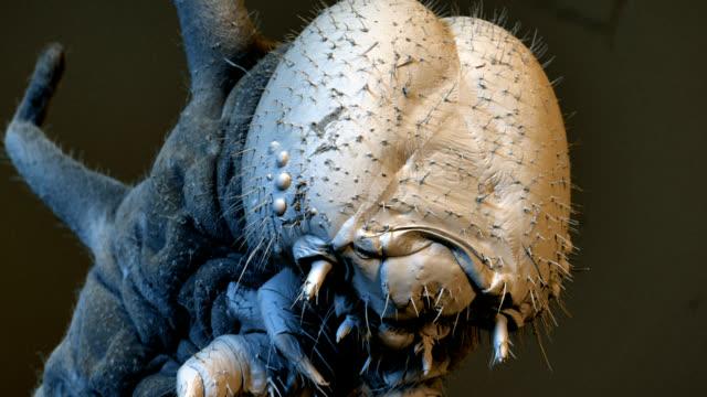 """euploea caterpillar, sem"" - magnification stock videos & royalty-free footage"