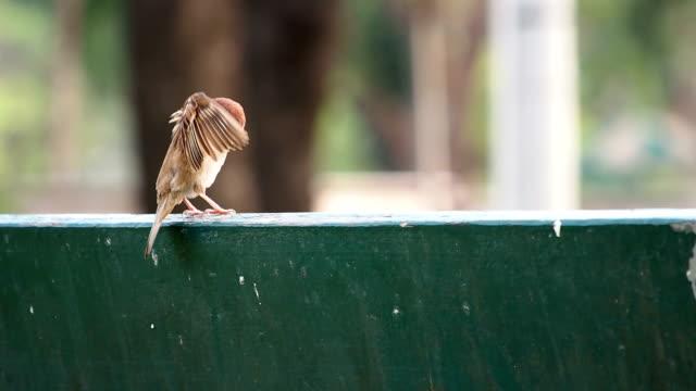 ユーラシアツリー sparrow - ユーラシアエスニシティ点の映像素材/bロール