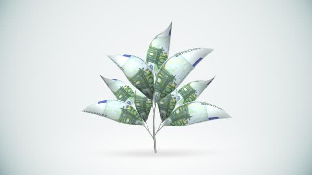 vídeos de stock e filmes b-roll de árvore de crescimento-alpha matte incluído, hd, ntsc - matte image technique