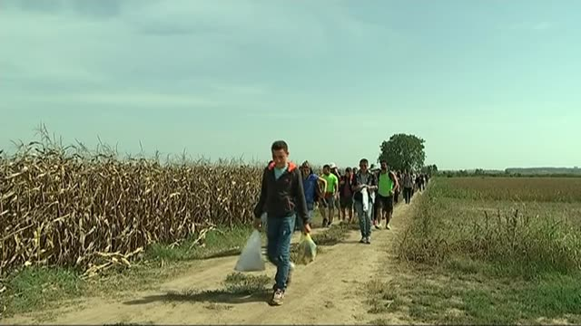 violent clashes between police and refugees at SerbiaHungary border SERBIA Various of refugees along path in corn field