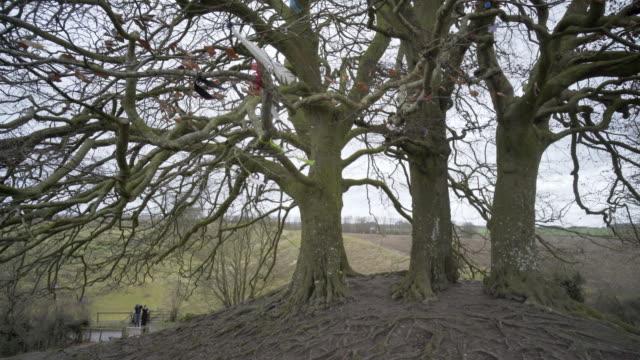 european beech trees on the avebury barrows. - avebury stock videos & royalty-free footage