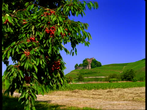 A European castle resides on a green hill with branches of a cherry tree in the foreground.